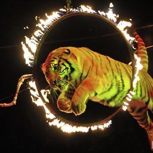 Цирки Чекмагуша