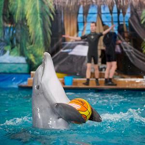 Дельфинарии, океанариумы Чекмагуша
